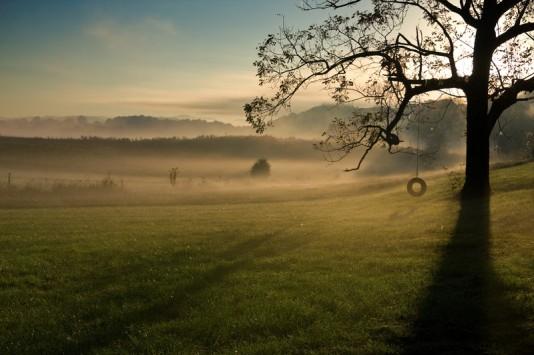 Morning glory (TN landscape)